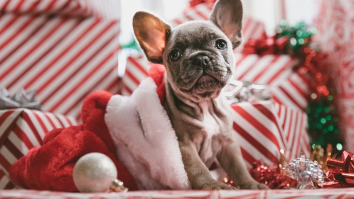 Gen Z are primed and ready for a festive season like no other.